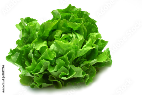 Fotografie, Obraz  butterhead lettuce 2