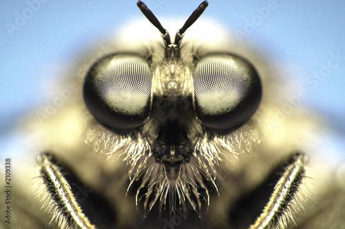 Türaufkleber Makrofotografie fly eyes