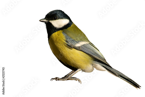 Deurstickers Vogel tomtit bird isolated on white
