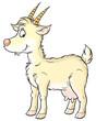 canvas print picture goat