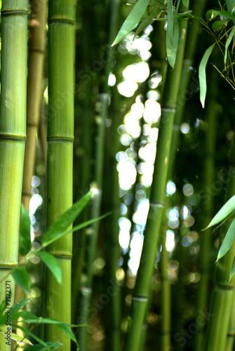 In de dag Bamboo bambouseraie