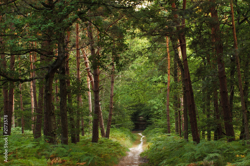 Garden Poster Road in forest foret