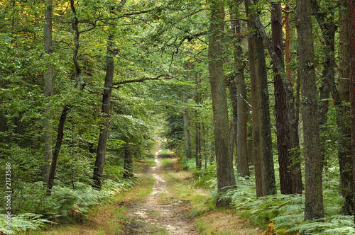 Aluminium Prints Road in forest foret