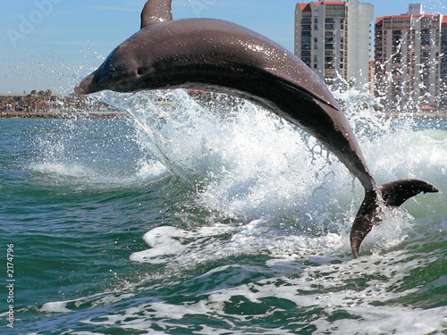 Canvas Print clearwater dolphin