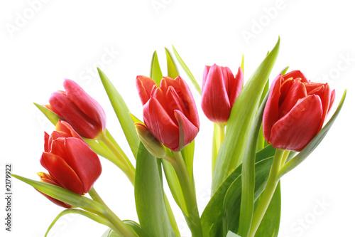Papiers peints Tulip tulips