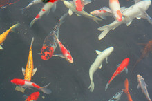 Fishes  5666
