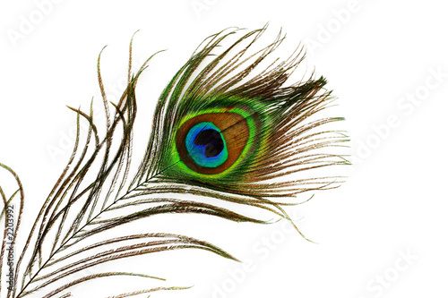 Deurstickers Pauw peacock feather eye