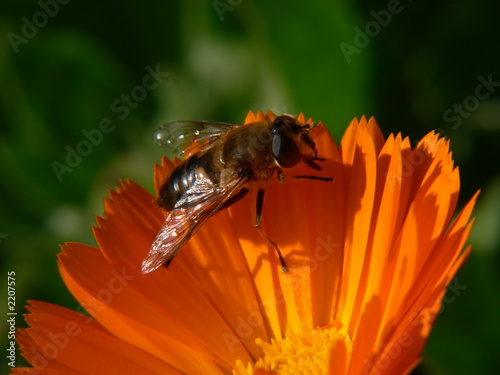 Aluminium Prints Bee abeille