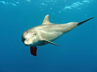 Fototapeta delfin 03