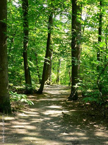 Foto op Canvas Weg in bos forêt - forest