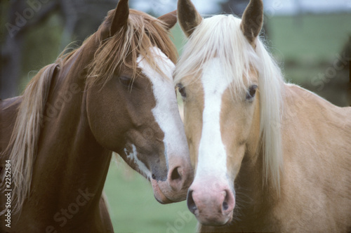 Juliste  two horses loving