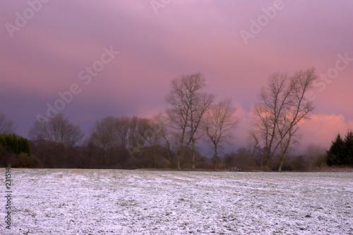 Foto op Aluminium Purper frosty morning