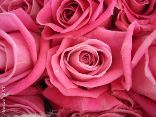 Wall Murals Flower shop roses