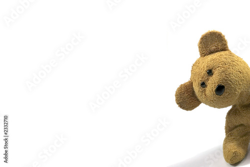 Fotomural teddy peeking