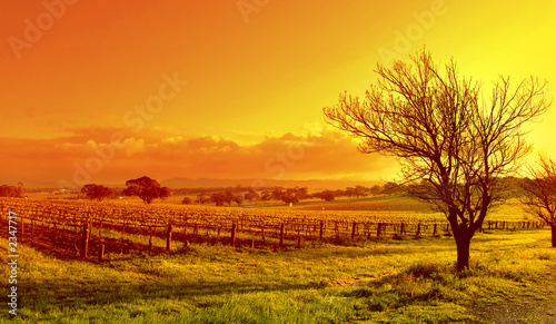 Door stickers Orange Glow vineyard landscape sunset