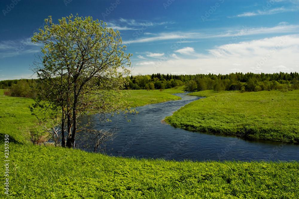 Fototapety, obrazy: tree on river
