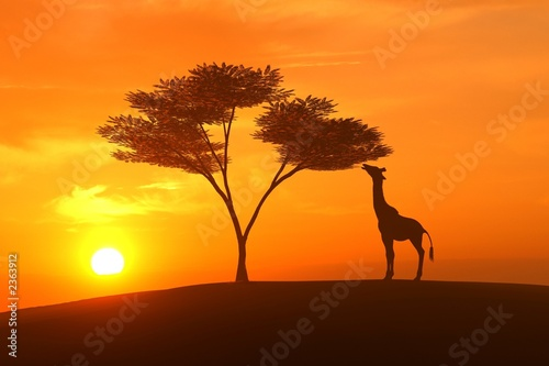 canvas print motiv - Richard Lister : giraffe asunset