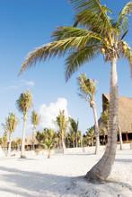 Palm Trees On The White Sand Beach