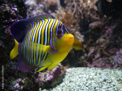 Fototapety, obrazy: poisson d'aquarium