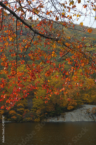 red leaves at bear mountain Canvas-taulu