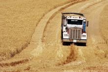 Harvest Time 15