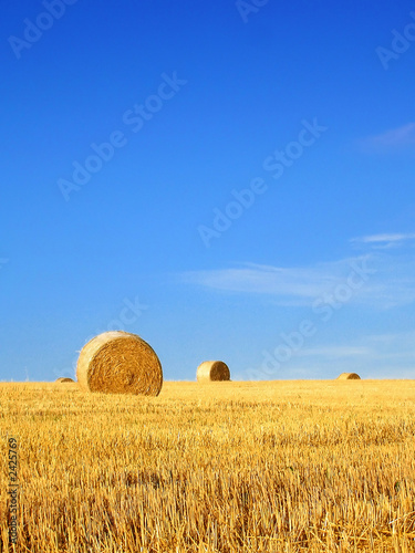 field with bales of hay Canvas Print