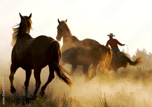 Photo  wrangler herding wild horses