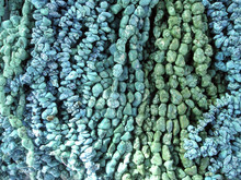 Turquoise Stone Beads