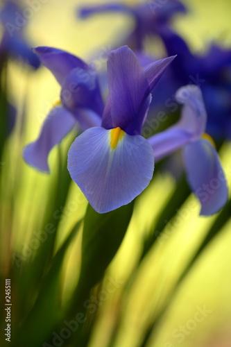 flower 5 - 2455111