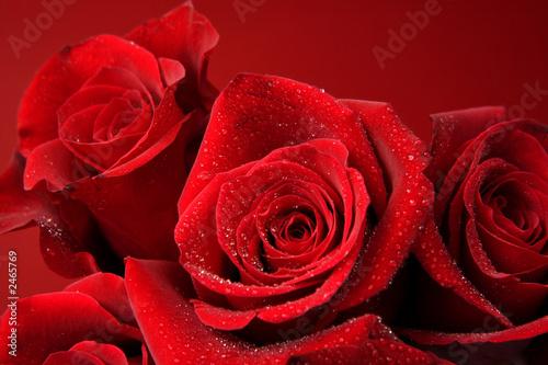 Foto-Kissen - hintergrund mit roten rosen (von eyewave)