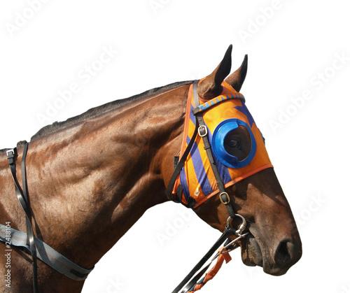 Photo blinkered racehorse