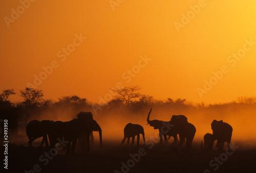 Spoed Foto op Canvas Marokko elefanten, namibia