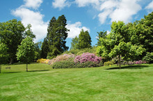 Trees And Lawn On A Bright Summer Day