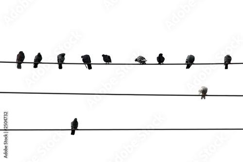 Photo sur Toile Oiseaux sur arbre birds on wire