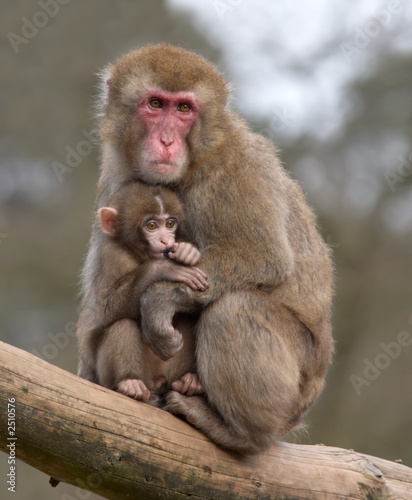 In de dag Aap mother and her baby monkey