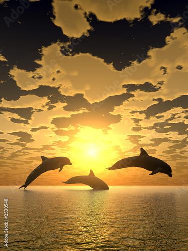 Poster Dolfijnen dolphin yellow sunset