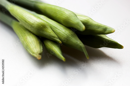 Garden Poster Narcissus bunch of daffodil buds
