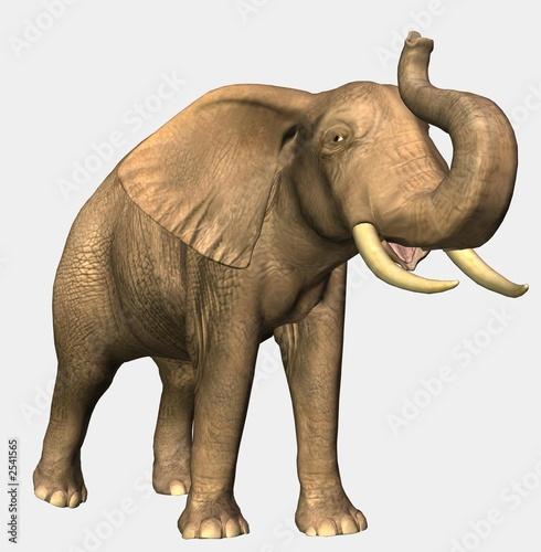 Foto op Aluminium Olifant elefant