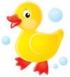 Leinwandbild Motiv duckling