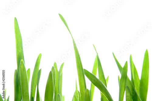 Fotorollo basic - herbe
