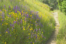 Walking Path Through Field Of Flowers