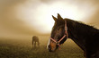 canvas print picture horse in the mist