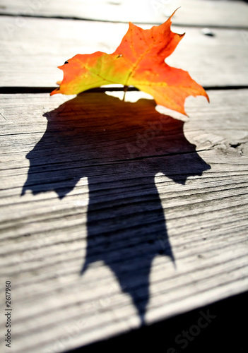 Spoed Foto op Canvas Aquarel Gezicht maple leaf