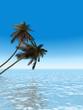 palms_morning_v