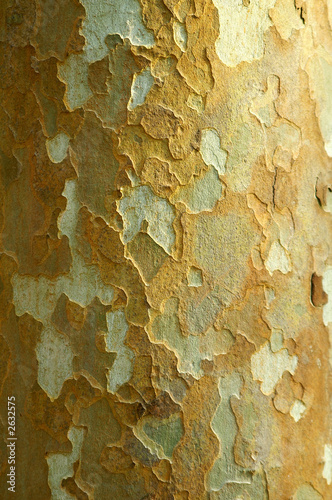 Canvas Prints Old dirty textured wall corteccia