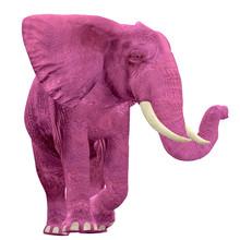 Pink Elephant - 03