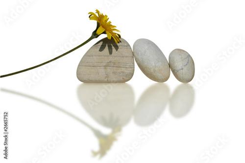 Plissee mit Motiv - composition fleur et galets (von Martine A Eisenlohr)