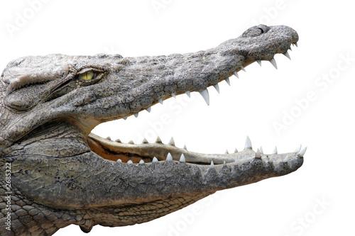 Deurstickers Krokodil crocodile gueule ouverte sur fond blanc