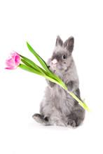 Bunny Holding A Tulip