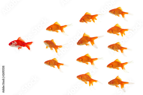 red goldfish leading Wallpaper Mural